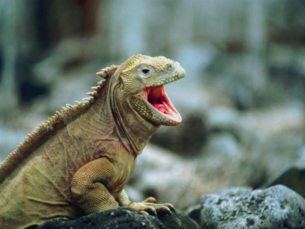 Lizard_and_Varan_006
