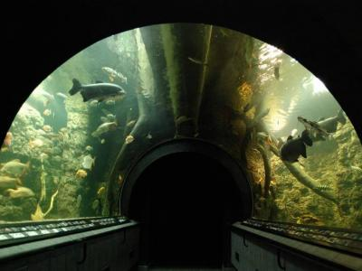 Obri_akvarium