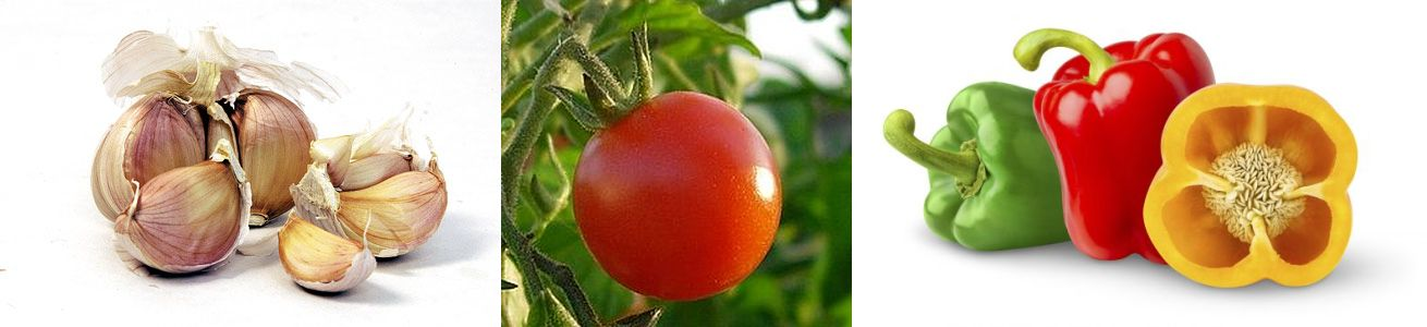 ajlo-tomato-kapsiko
