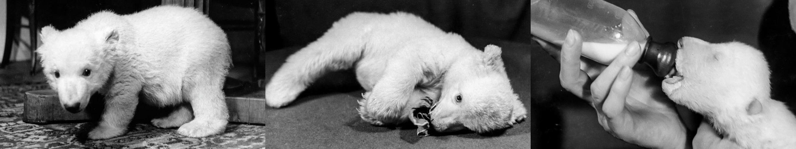 ursoo